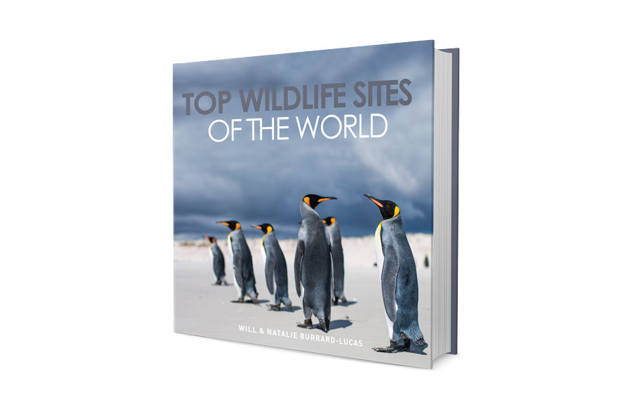 Top Wildlife Sites!