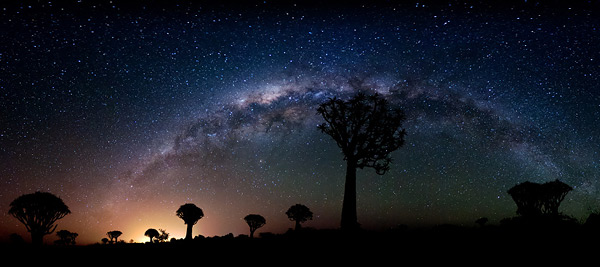 Quiver Trees by Night by Florian Breuer