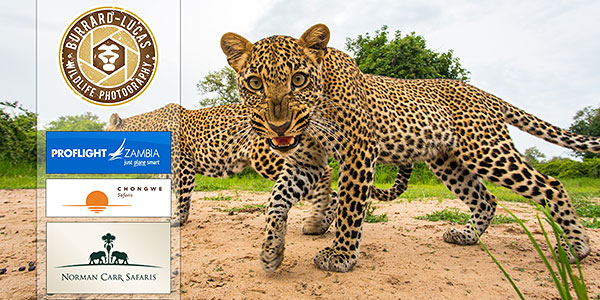 Win a $12k African Safari!