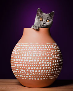 Pixie in a Vase by Robert Maybach
