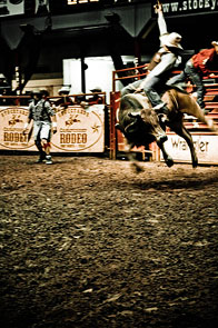 Rodeo by Basia