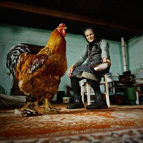 Story With the Red Rooster by Adrian Petrisor