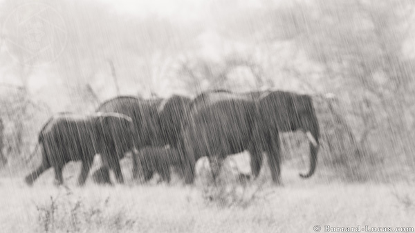 Black & White Fine Art Wildlife Prints