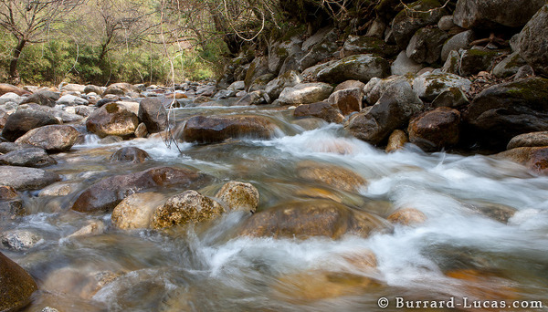 Qinling Mountain Stream
