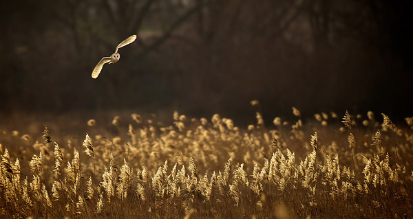 Dusk by Mark Bridger