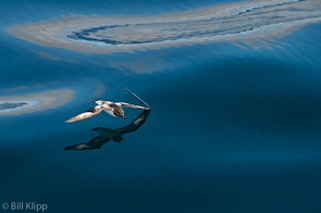 Skimming a Wave by Bill Klipp