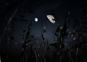 Night Butterfly by Arseniy