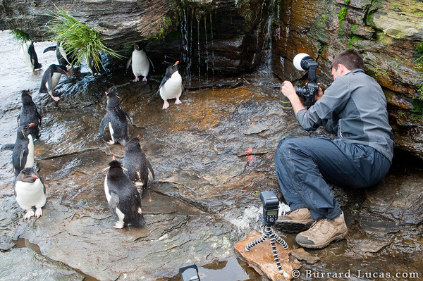 Will Showering Penguins