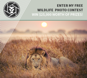 Wildlife Photography Contest
