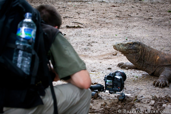 Photographing Komodo Dragons with KomodoCam