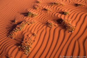 Wild flowers growing on a sand dune. The texture of the sand is emphasised by the shadows cast at sunset.
