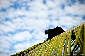"A Black Lemur. Our guide saw this shot and dubbed it ""The Nightmare"" which we think is a fitting title!"