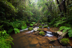 A rainforest stream in Mantadia National Park.