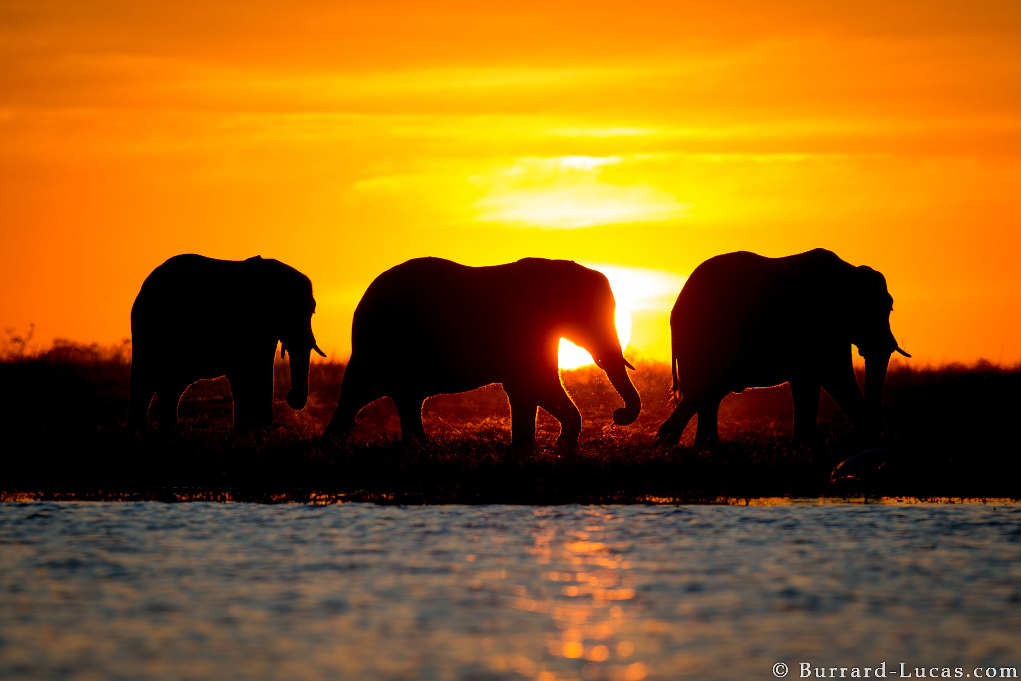 Elephant Sunset Burrard Lucas Photography
