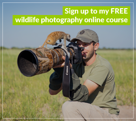 Free Wildlife Photography Course
