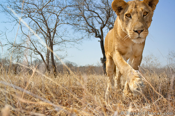 The photograph taken by BeetleCam just before it was mauled!