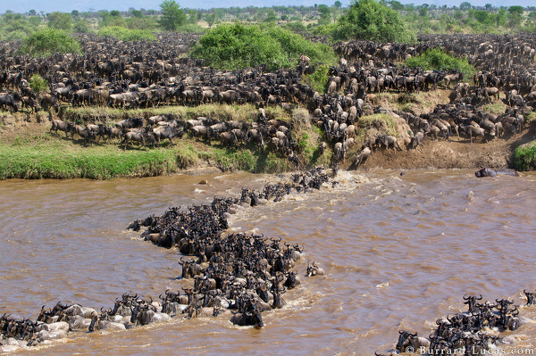 Great Migration, Serengeti, Tanzania