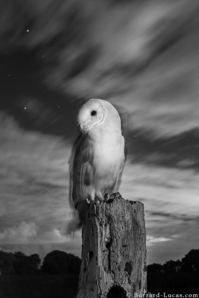 Barn Owl Camera Trap