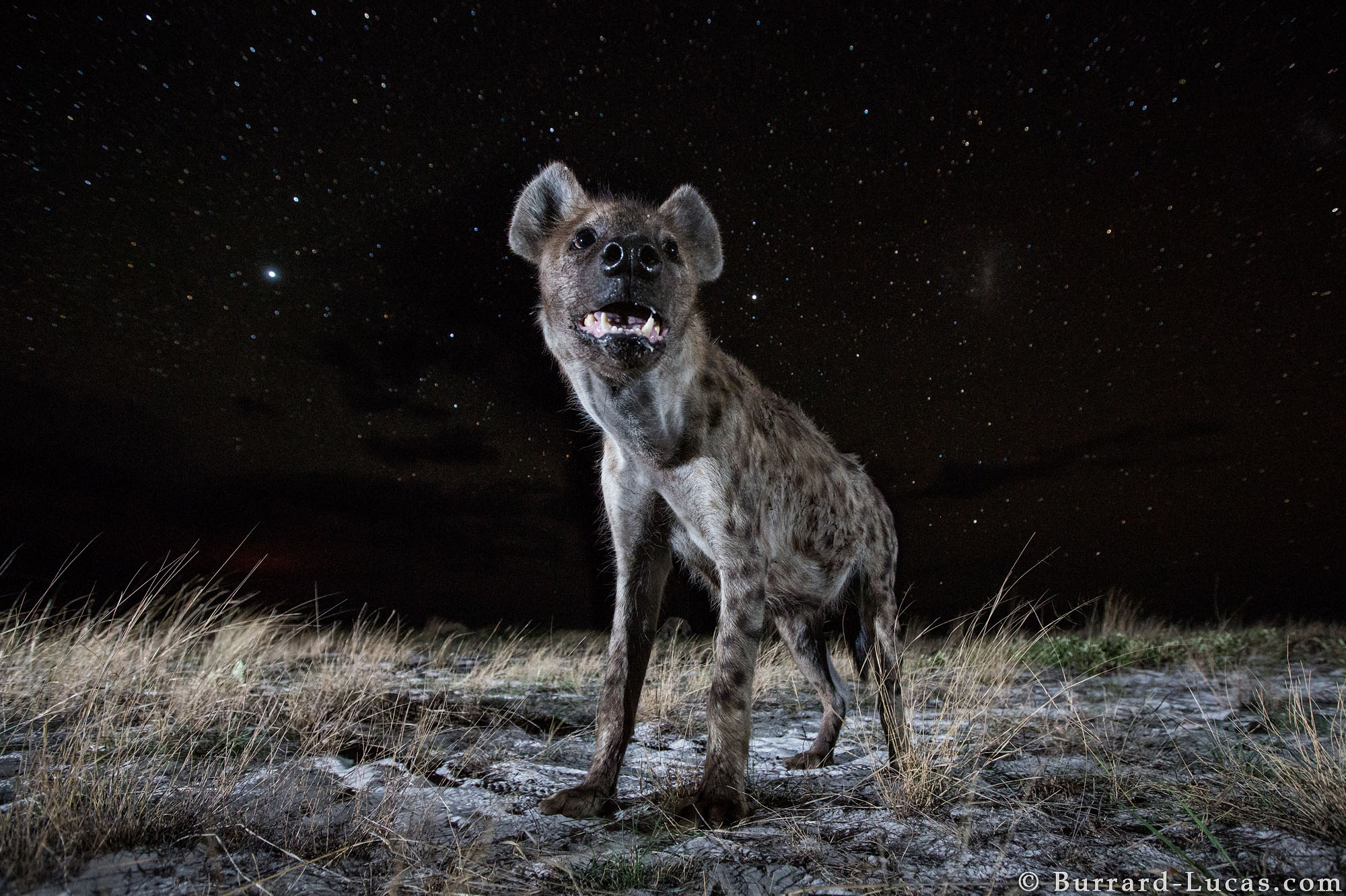 Image of: Kruger National Burrardlucas Wildlife Photography Wildlife At Night