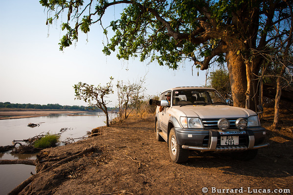 In my car, under a sausage tree, on the banks of the Luangwa River!