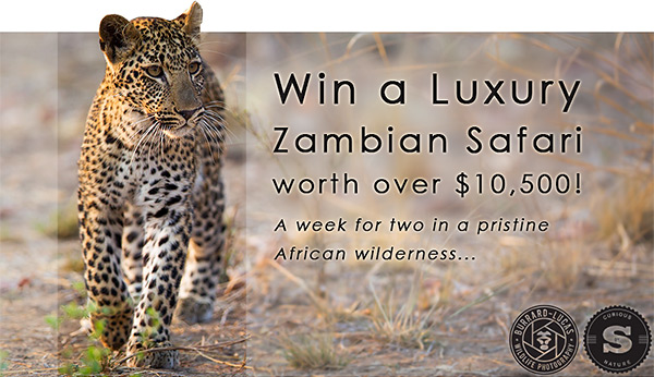 Win a Luxury Safari!