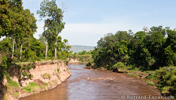 The Mara River, not far from where we found the pink hippopotamus.
