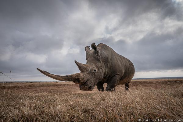 Burrard-Lucas Wildlife Photography