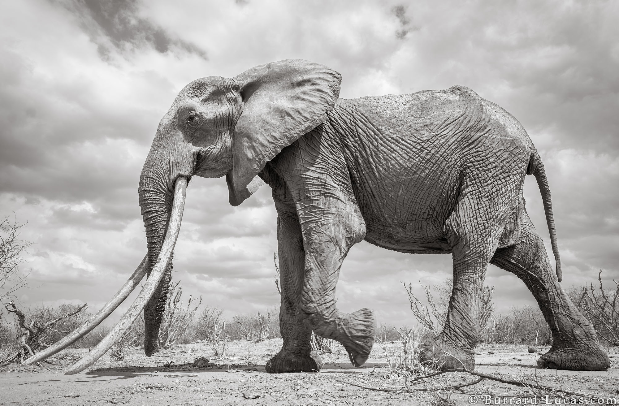 Last photographs of the Elephant Queen
